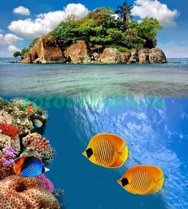 Фотообои Две рыбки Бабочки