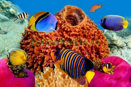 Фотообои Рыбки около коралла