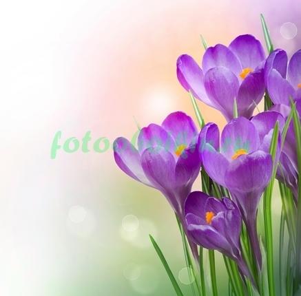 Фотообои Тюльпаны под горой