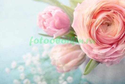 Фотообои Открытый цветок пиона