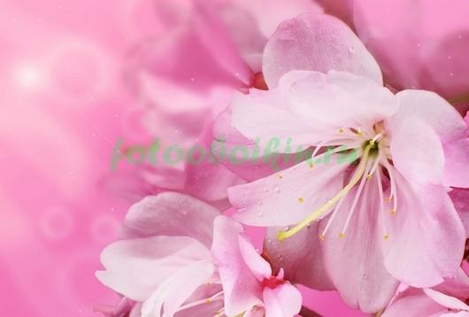 Фотообои Розовые лилии на розовом