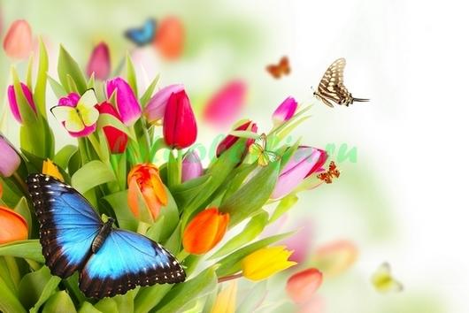 Фотообои Бабочка на весеннем букете
