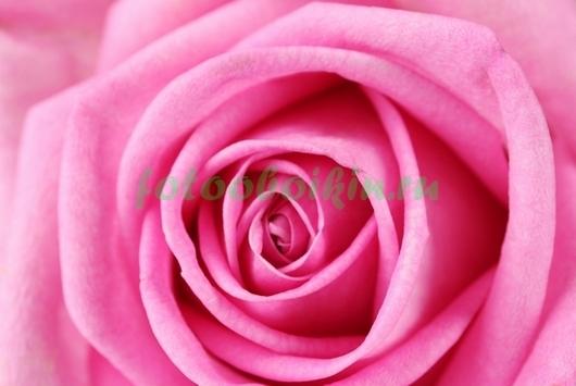 Фотообои Красивая роза