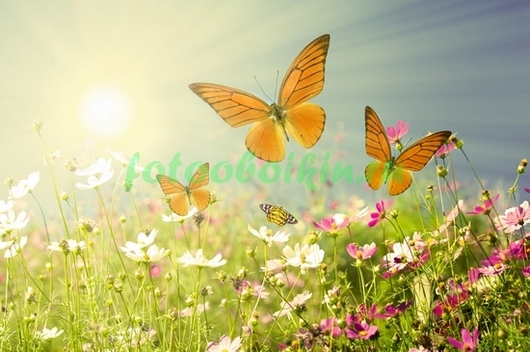 Фотообои Бабочки в поле