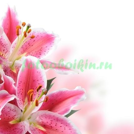 Фотообои розовая тигровая лилия