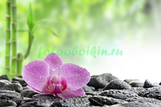Фотообои Орхидея с бамбуком