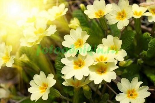 Фотообои Садовые ромашки