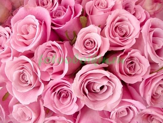 Фотообои Оттенки розового
