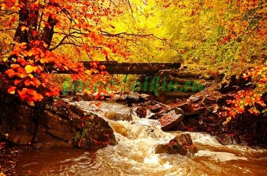Фотообои Бурная речка