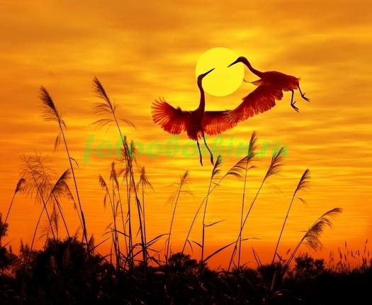 Фотообои Танец журавлей