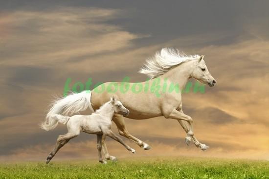 Фотообои Лошадь с жеребенком