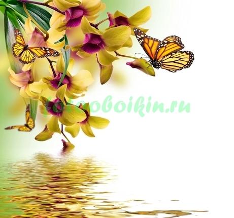 Фотообои Бабочки около орхидеи