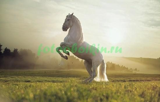 Фотообои Изабелловая лошадь