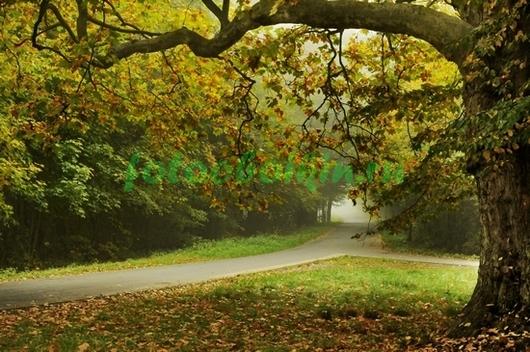 Фотообои Развилка в лесу