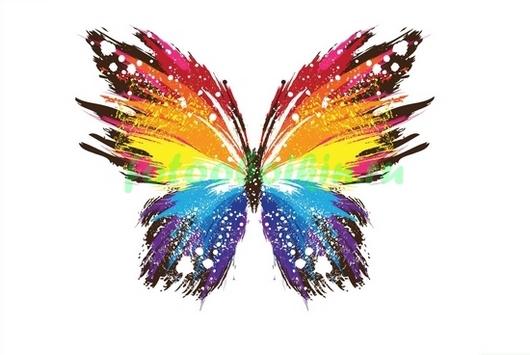 Фотообои Цветная бабочка