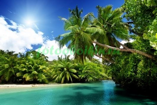 Фотообои Тропические заросли