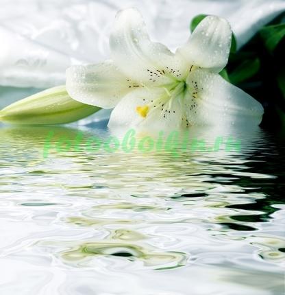 Фотообои Белая лилия в воде
