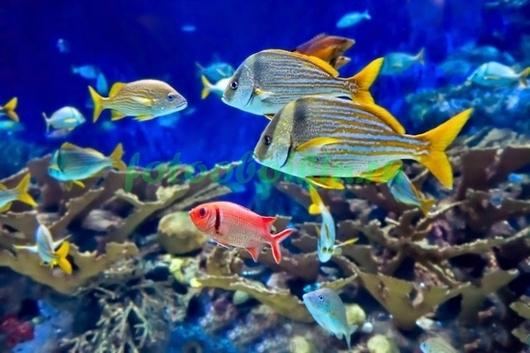 Фотообои Жизнь около рифов