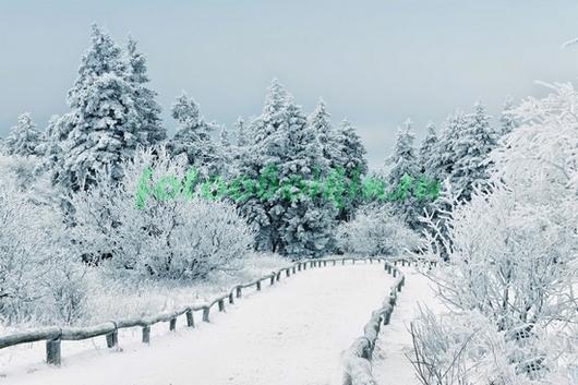 Фотообои Дорога в зимнем лесу