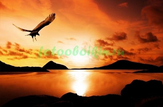 Фотообои Птица на закате