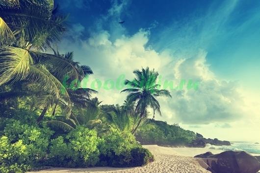 Фотообои Пальмы на ветру