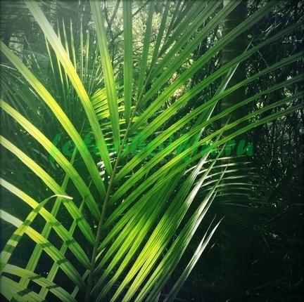Фотообои Ветка пальмы