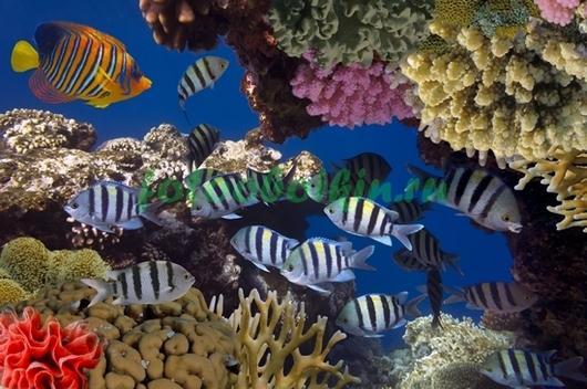 Фотообои Рыбки между кораллами