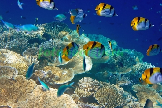 Фотообои Рыбки на фоне кораллов