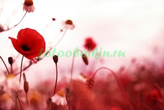 Фотообои Красная полянка