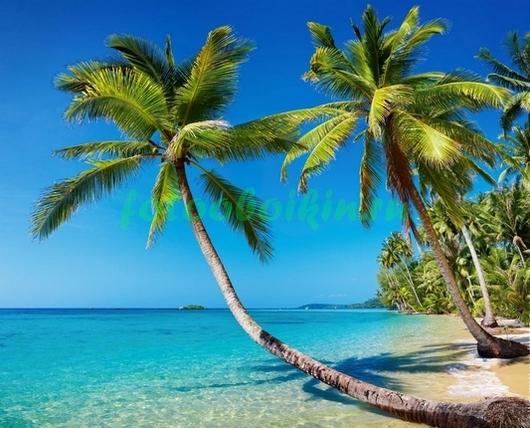 Фотообои Пальмы у воды