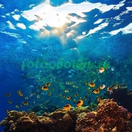 Фотообои Рыбки глубоко под водой