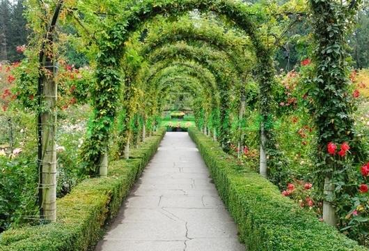 Фотообои Зелёная арка