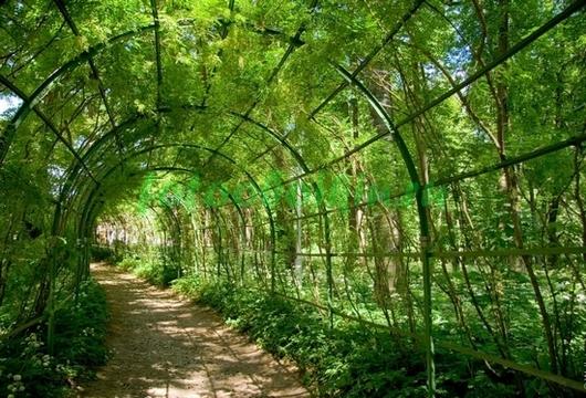 Фотообои Зелёный тоннель