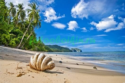 Фотообои Раковина на берегу