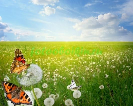 Фотообои Бабочки в одуванчиковом поле