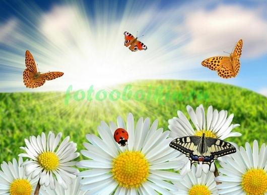 Фотообои Ромашки и бабочки