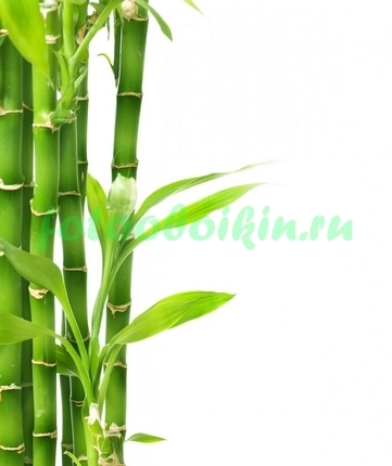Фотообои Бамбук на белом фоне