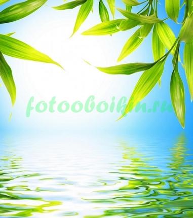 Фотообои Листья над озером