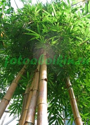 Фотообои Бамбук вид снизу