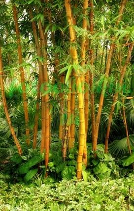 Фотообои Бамбук на острове