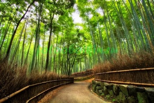 Фотообои Тропинка в бамбуковом лесу