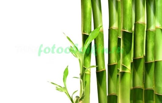 Фотообои Зеленый бамбук