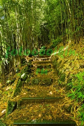 Фотообои Ступеньки в бамбуковом лесу