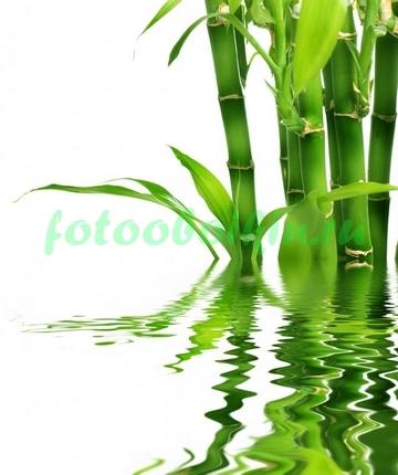 Фотообои Стебли бамбука из воды