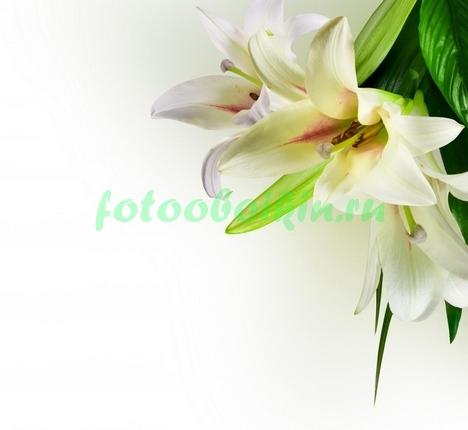 Фотообои Букет лилий