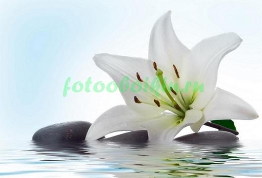 Фотообои Цветок лилии