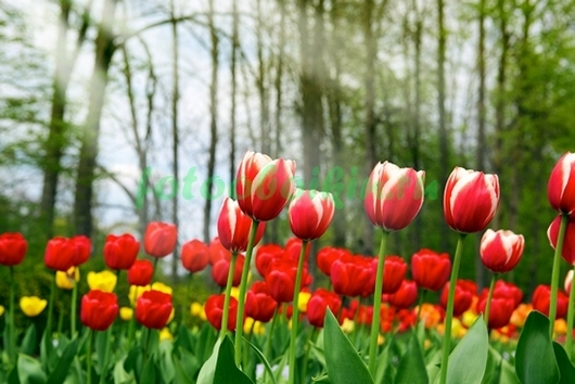 Фотообои Яркая лилия