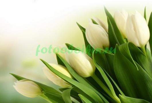 Фотообои Букет белых тюльпанов