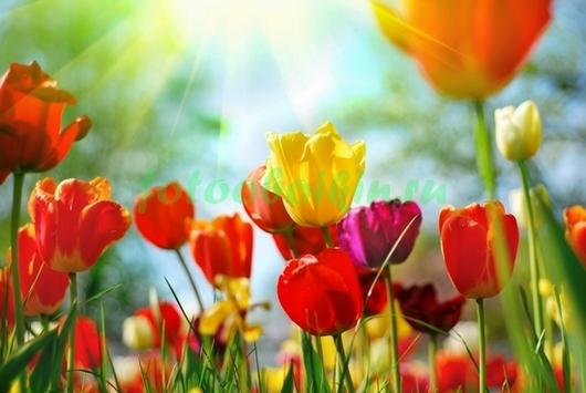Фотообои Растущие тюльпаны