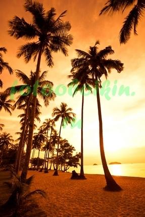 Фотообои Выскоие пальмы